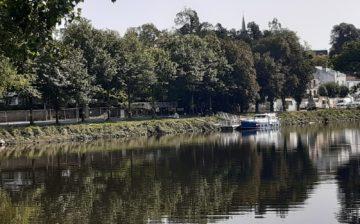 """A Vertou, 16 arbres arbres sont menacés d'abattage par le projet d'aménagement """"Demain la Sèvre"""""""